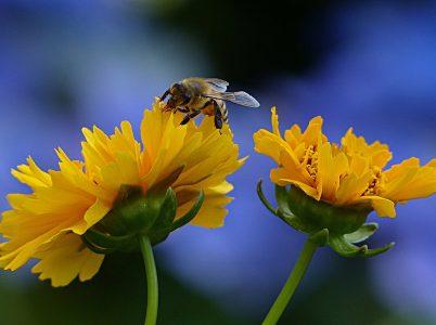 Le api, affascinanti animaletti della mitologia