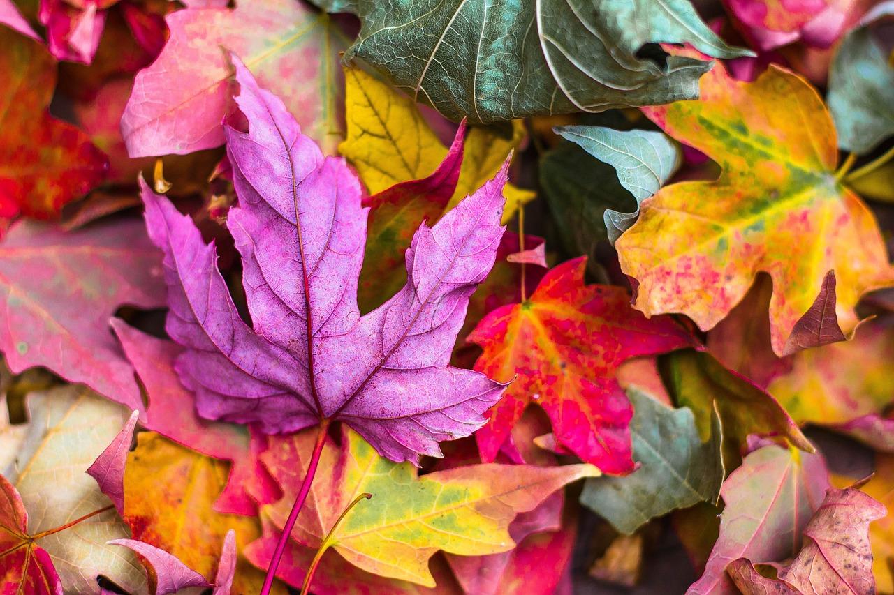 Il fascino dell'equinozio d'autunno tra scienza, mitologia, storia e tradizioni