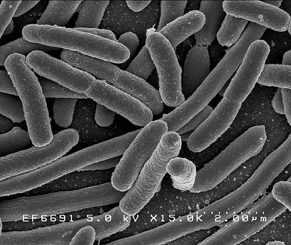 Alimenti transgenici – OGM