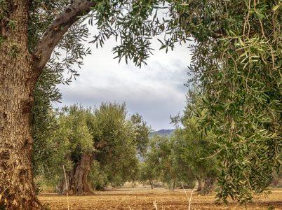 Elaide, Eno e Spermo: le protettrici di olio, vino e grano